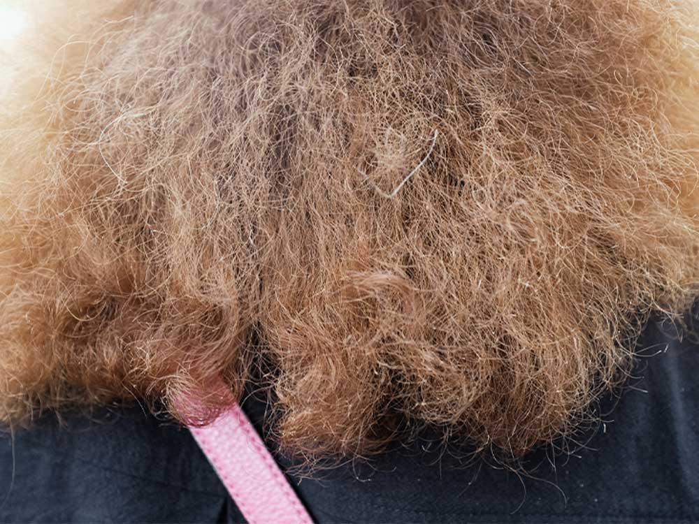 راه های درمان موی سوخته