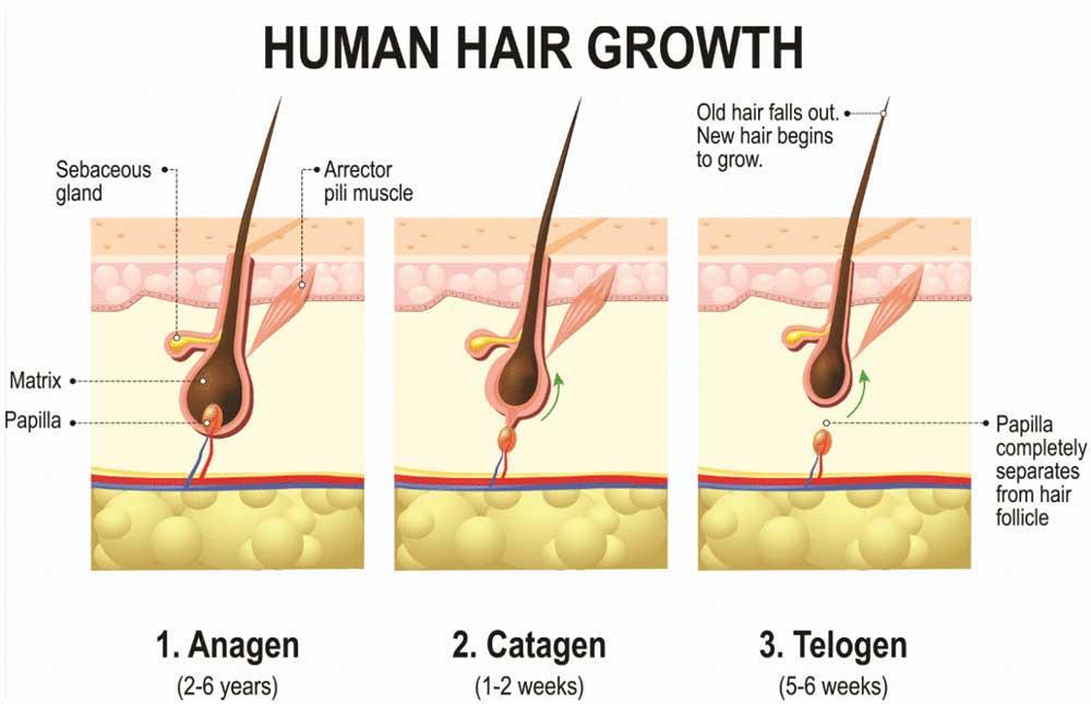 چرخه رشد مو در نوجوانان