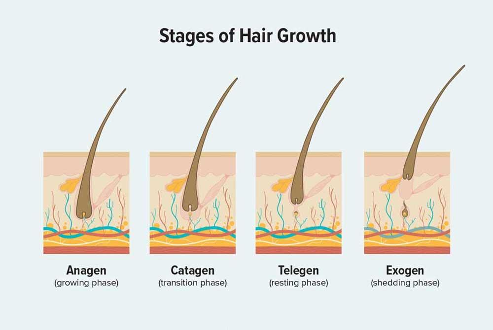 پروسه طبیعی رویش موی سر